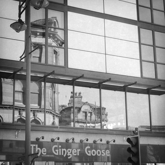 The Ginger Goose